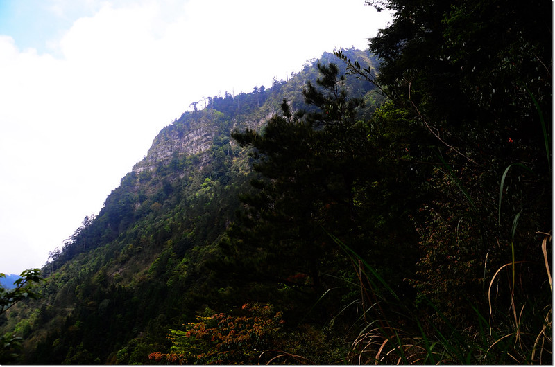大鹿林道西線仰望榛山山稜