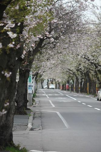 Sakura River Street