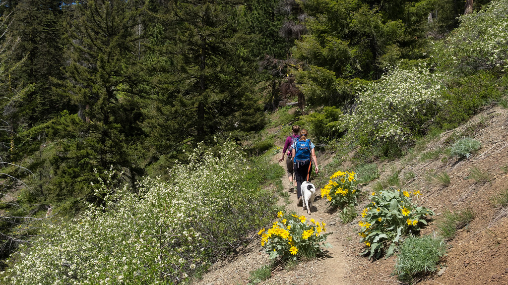 Trail through the flowers