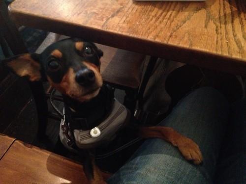 ワンコOKカフェでランチ。下からがん見する黒犬。