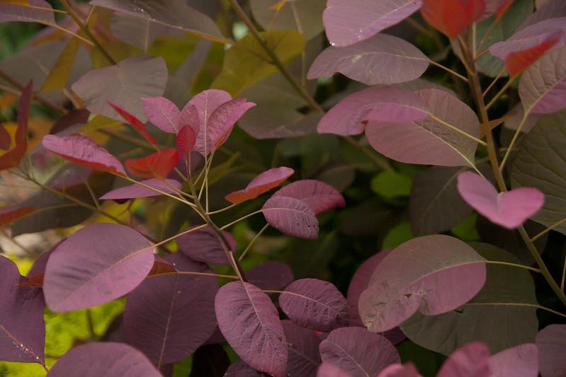 Plant Passion Garden 2