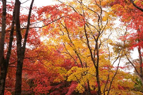 【写真】2012 紅葉 : 笠置山もみじ公園/2020-05-28/IMGP6132
