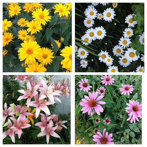 Summer pretties.#garden