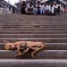 Varanasi - India by iontrop