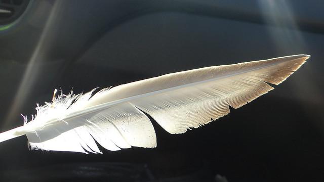 DSC05970 3 110813 feather