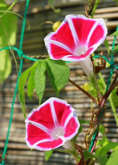 """Floral"" Day 16 / #augusutbreak2013"