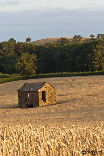 field wheat bergerie aveyron fieldsofgold midipyrénées fieldofwheat blés midipyrénnées laselve champdeblés réquistanais garissous