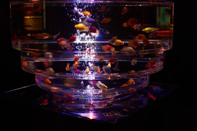 Art Aquarium 2013 5/23