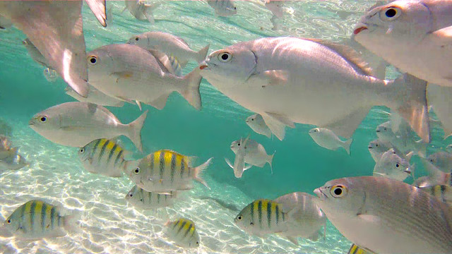 Peces tropicales nadando en aguas cristalinas en México