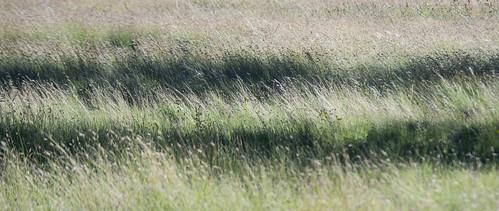 arizona autoimport flagstaff prairiegrass abstract grass unitedstates flickr