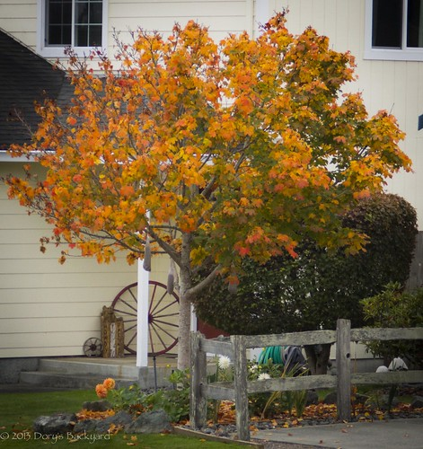 20131021_OrangeTrees