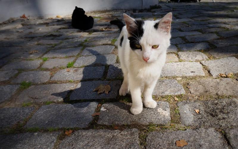 Stray-Cats-Istanbul-(21)