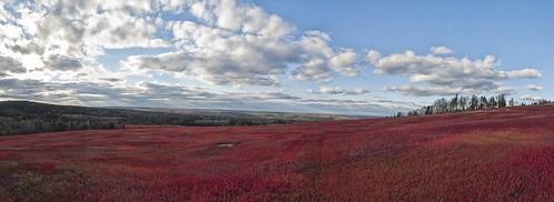 newbrunswick cranberries cranberryfields