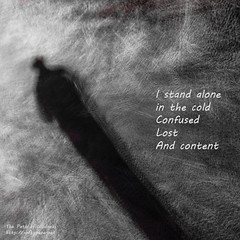Standing alone in the cold - The Path of Wildness