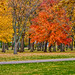 Small photo of Autumn in Amboy