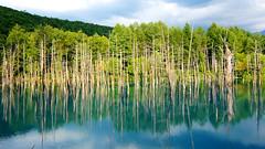 北海道:青い池 Hokkaido