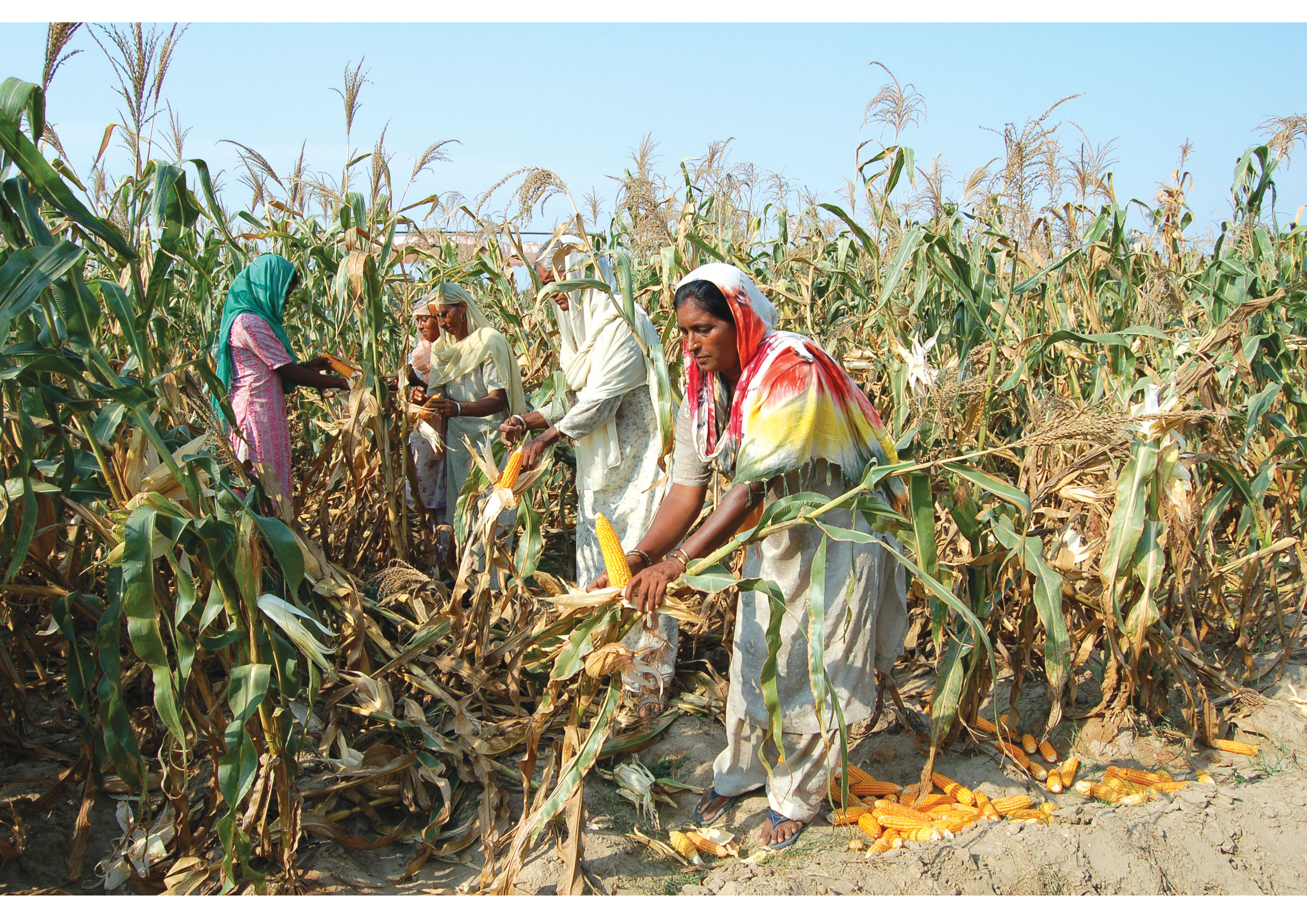 importance of food crops