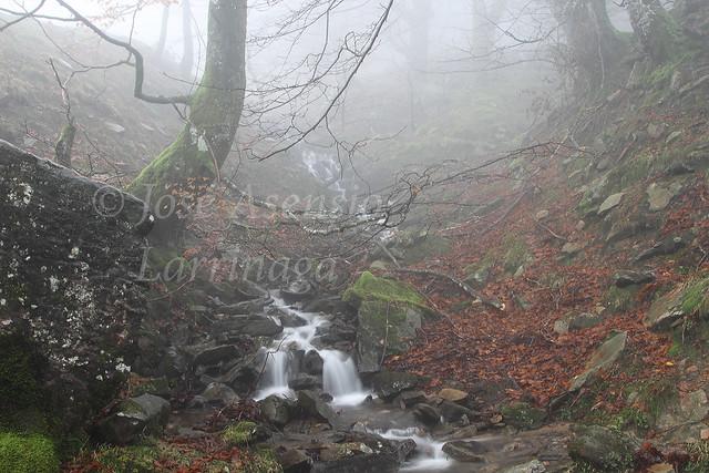 Parque Natural de Gorbeia/Gorbea #DePaseoConLarri #Photography 2134