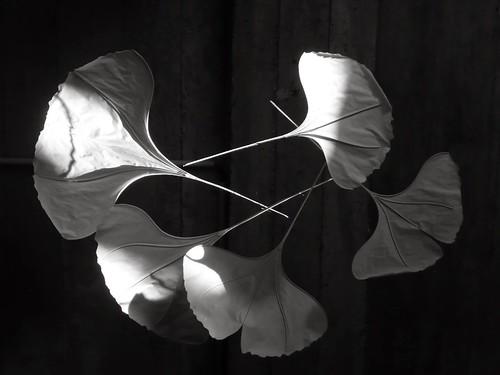 ginkomobile-paper-sculpture