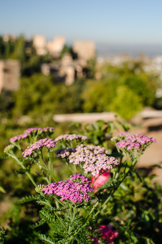 Flowers along the edge of the lower Generalife Gardens, with the Nasrid Palace in the background.