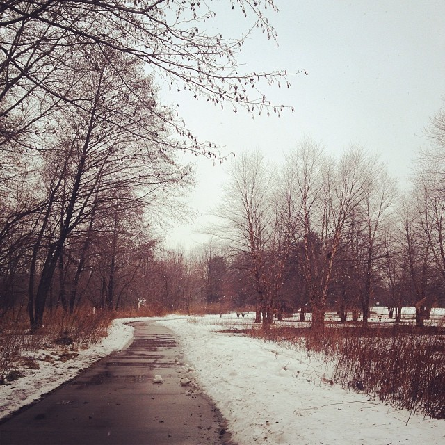Morning run in Softly falling snow.