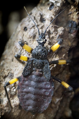 Assassin Bug 02-16-14