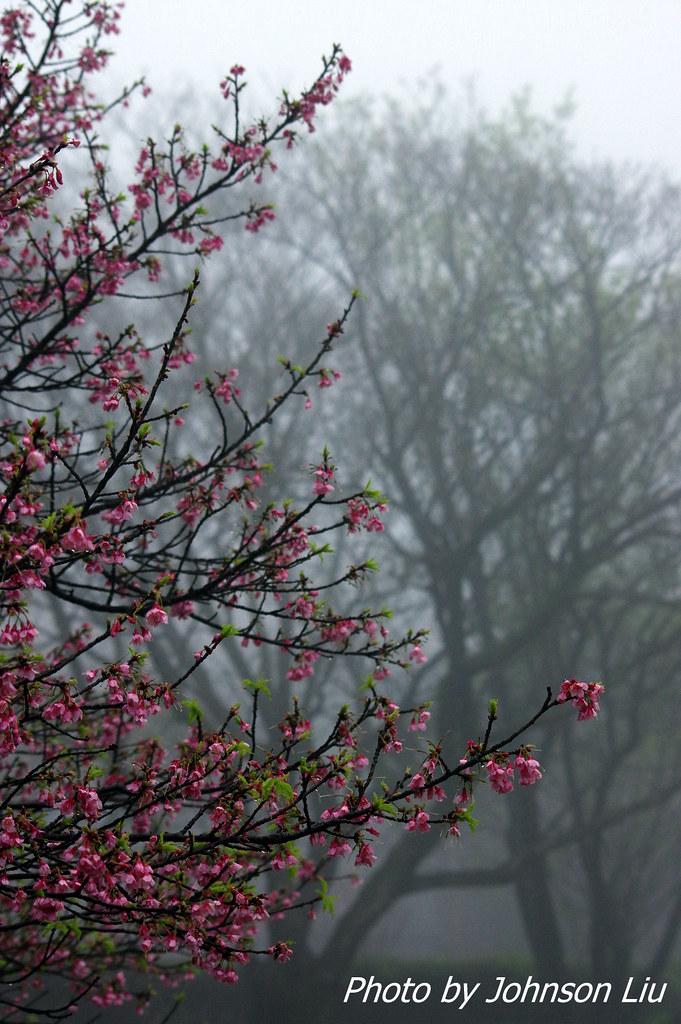 霧&雨 陽明山