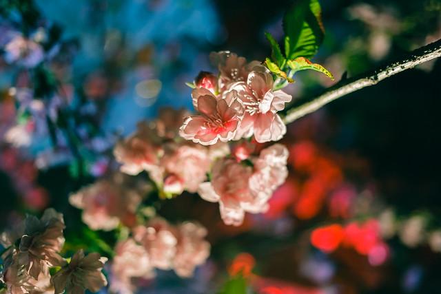 人造花 Silk Flowers