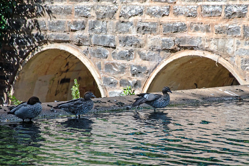 Three little ducks.