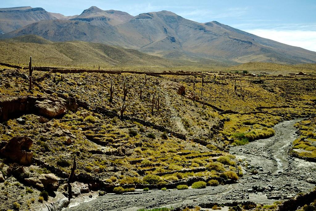 Terrazas De Cultivo Cupo Calama Chile Echinopsis Atacam