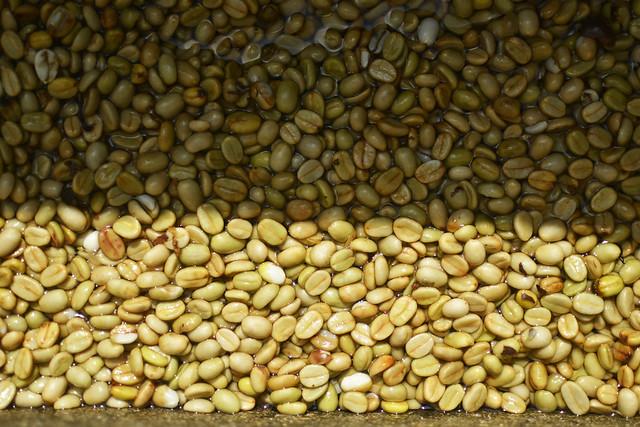 LA ALICIA'S ORGANIC COFFEE BEANS