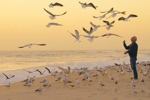 ocean food seagulls beach birds sunrise dawn