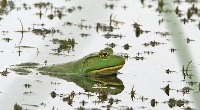 Frog 20d_5348