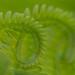 fern loops by zen granny