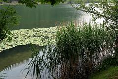 Segrino lake - Lecco
