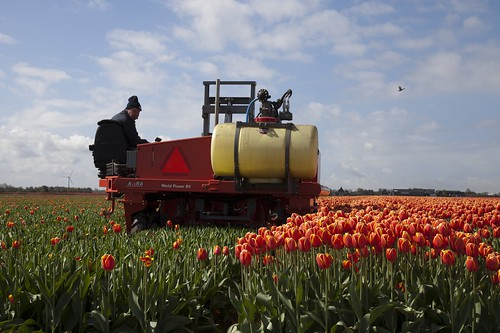 The Tulip Shearer at work