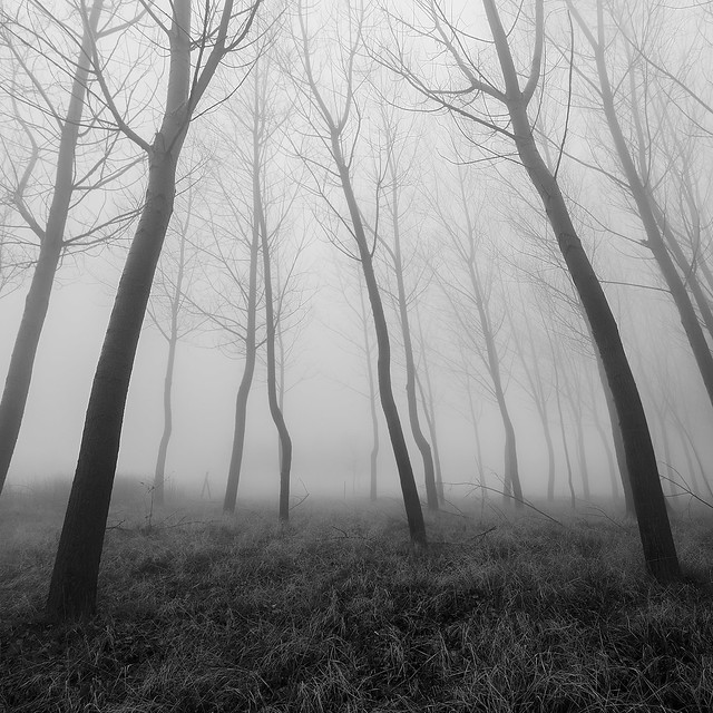 Lineas en la niebla