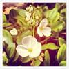 #flower  #white #tree