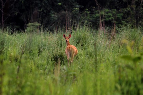 A lone deer separated from its herd ©WWF Nepal/ Pallavi Dhakal