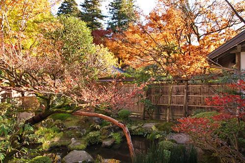 【写真】紅葉 : 宝泉院