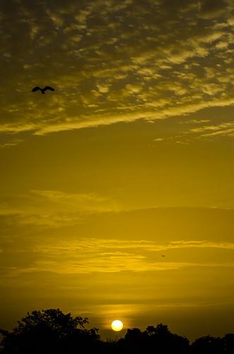 naturaleza sun sol nature sunrise venezuela amanecer llano efa llanura barinas 2013 garcero escuelafotoarte hatocristero destinofotoarte efaenbarinas