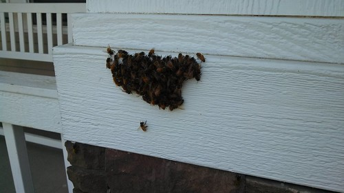 A small swarm on our front porch