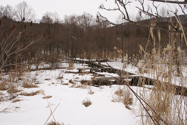 雪が少ない湿原は動物にとってはどのように感じるんだろうか?