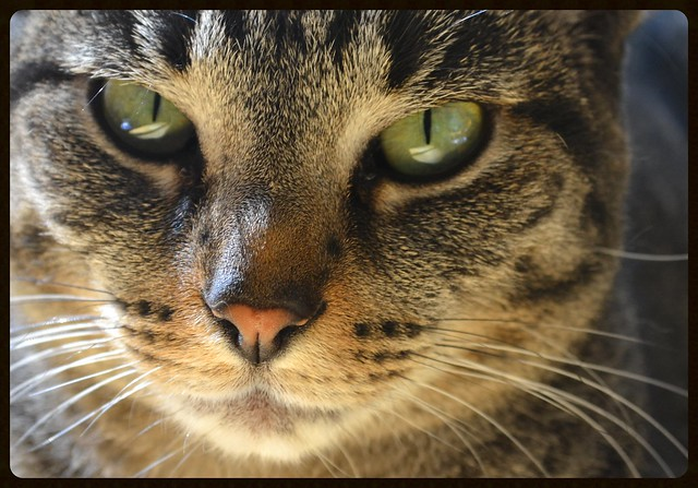 Flickr: The CATS that ...