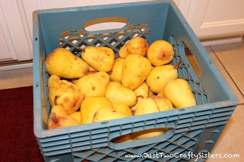 Pear season on the farm - time for pear sauce