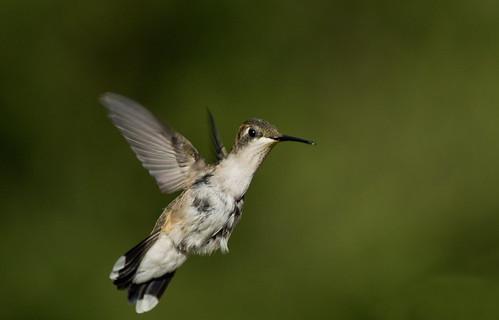 Tough Bird~ by conniee4 aka Connie Etter
