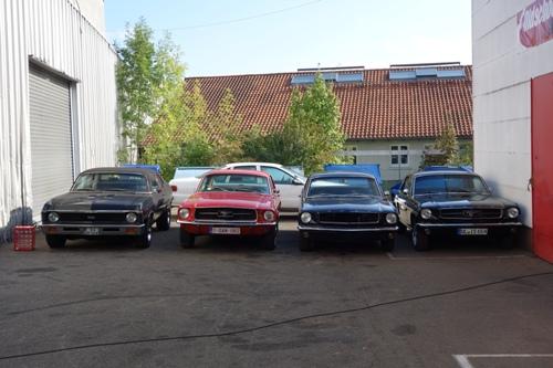 Mustang-Gang