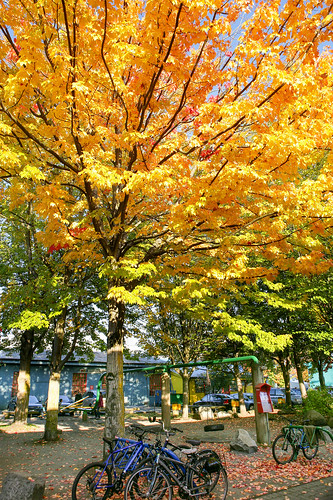 Autumn in Granville Island