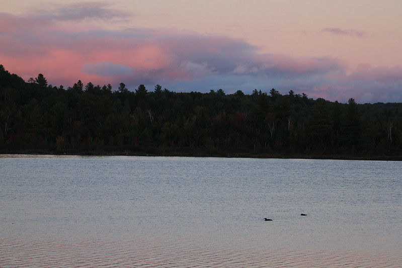 late day loons4