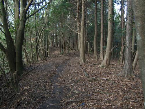 奥多摩のような暗い森に入ります